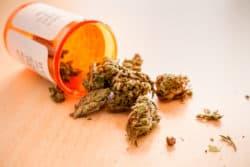 Neues deutsches Start-up importiert Cannabis