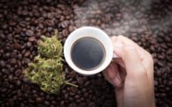 Kaffee, Cannabis und das Endocannabinoidsystem