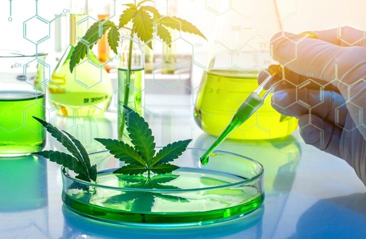 Natürliche und synthetische Cannabinoide