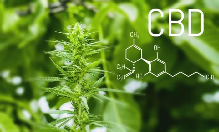 Synthetisches CBD gegen Epilepsie: Neue Studie