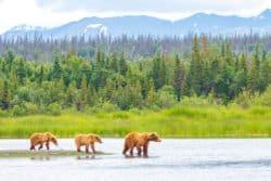 Alaska: Hanf-Pilotprogramm vor dem Aus