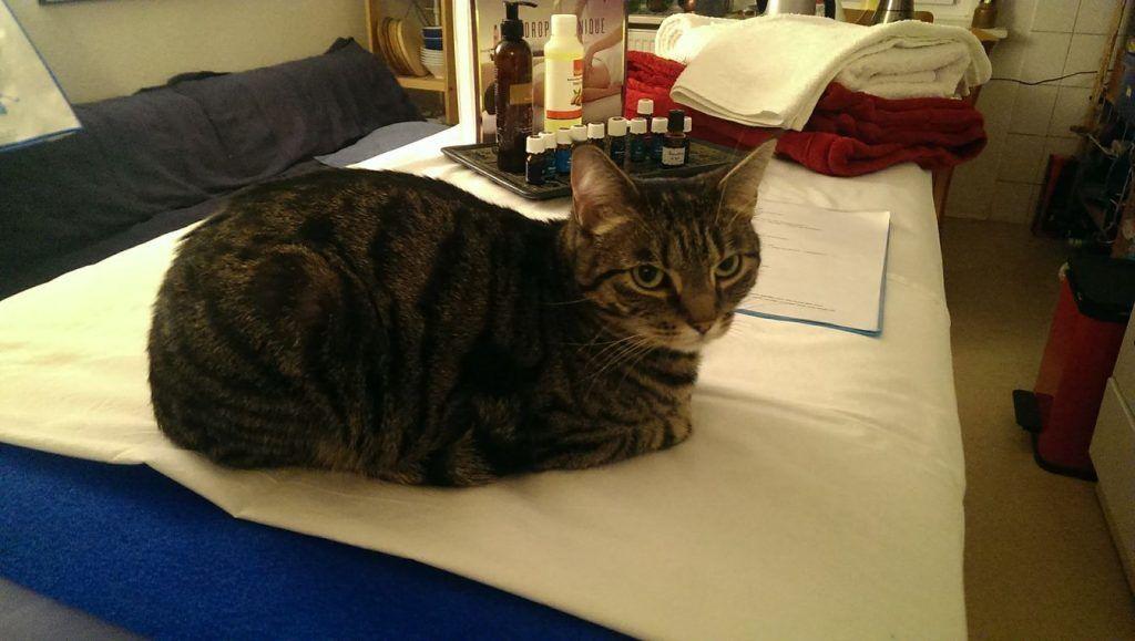 Katze auf Massageliege