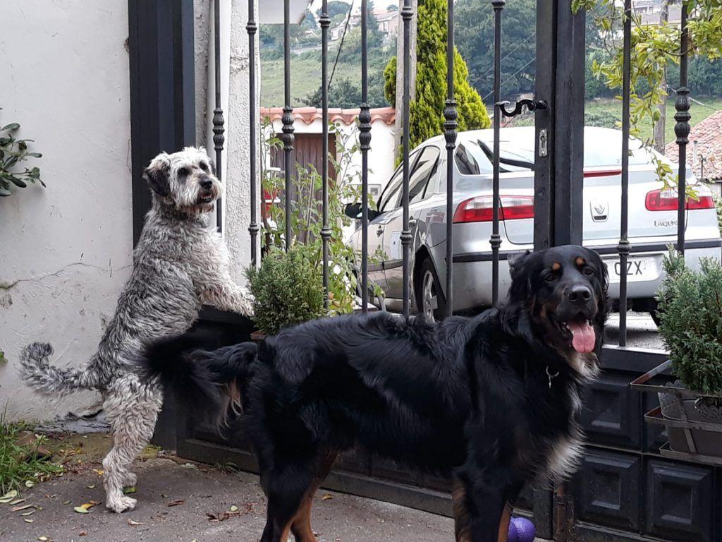 Foto de dos perros mirando a cámar