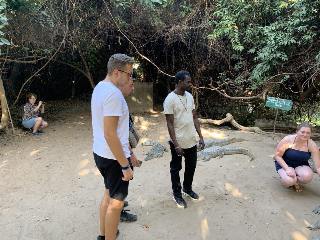 In Gambia (Afrika) gibt es die Möglichkeit, Krokodile zu sehen und zu streicheln. Gefährlich? Eher weniger.