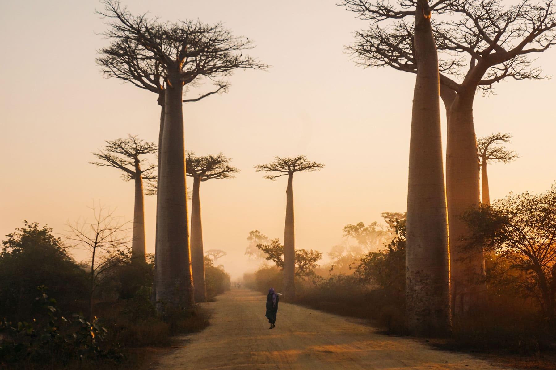 Resor-till-Madagaskar---natur---Nygren-Lind-Resebyrå