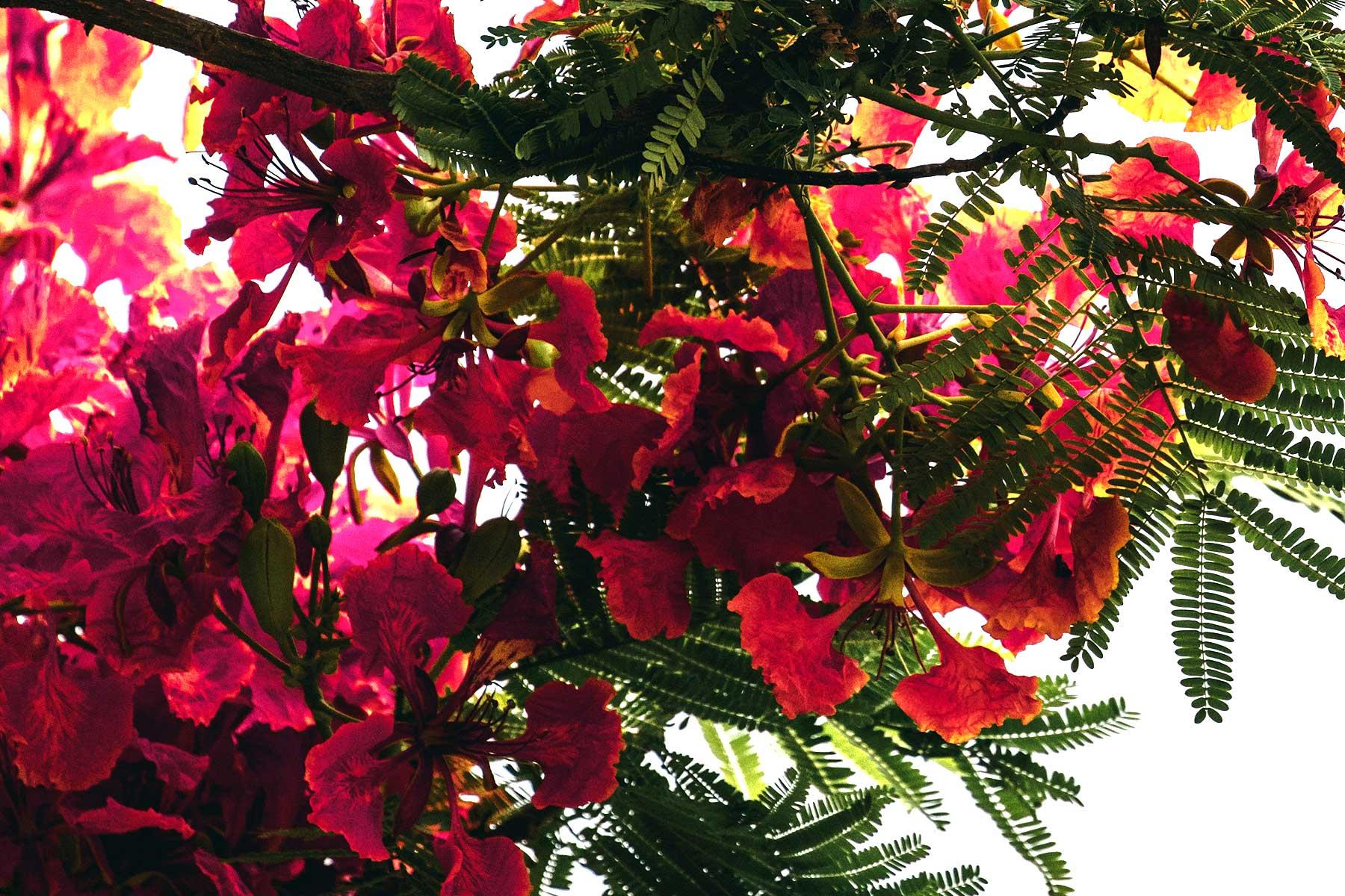 Skräddarsydda-resor-till-Ras-Al-Khaima---flora---Nygren-&-Lind-Resebyrå