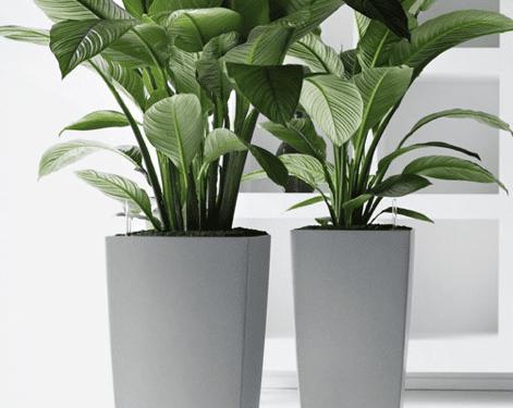 Plant Displays and plants uk