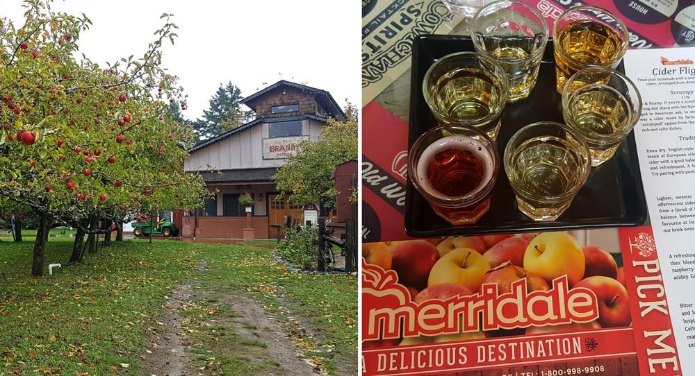 merridale cidery farm and a tasting sample of multiple ciders