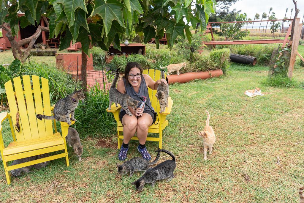feeding cats at the lanai cat sanctuary