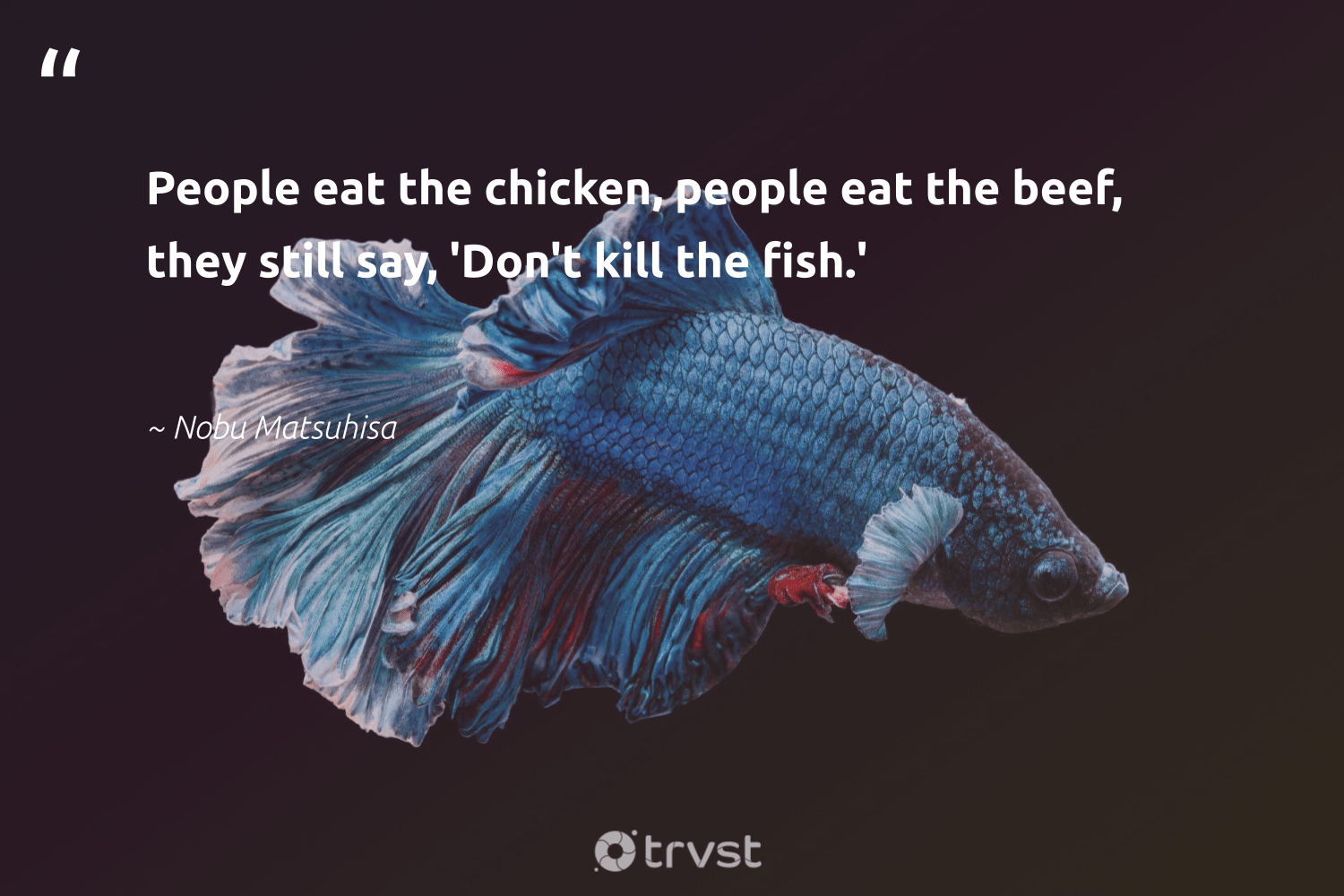 """""""People eat the chicken, people eat the beef, they still say, 'Don't kill the fish.'""""  - Nobu Matsuhisa #trvst #quotes #fish #oceans #dotherightthing #sealife #socialimpact #savetheoceans #dosomething #perfectnature #beinspired #biodiversity"""