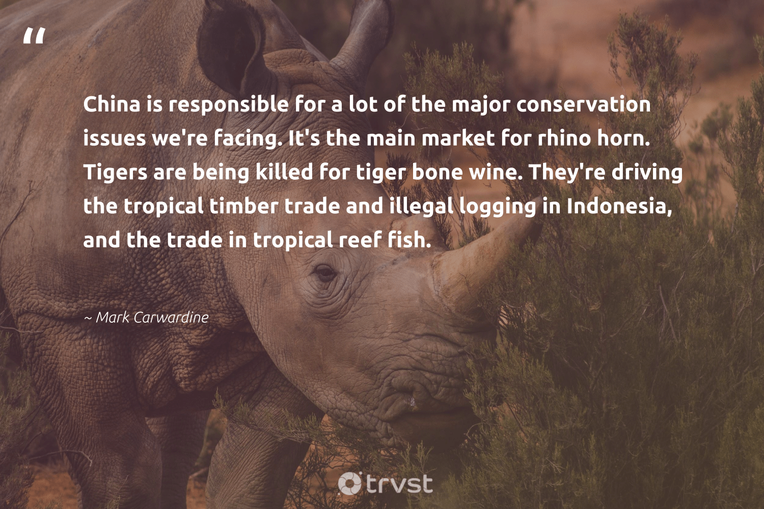 """""""China is responsible for a lot of the major conservation issues we're facing. It's the main market for rhino horn. Tigers are being killed for tiger bone wine. They're driving the tropical timber trade and illegal logging in Indonesia, and the trade in tropical reef fish.""""  - Mark Carwardine #trvst #quotes #conservation #tiger #fish #rhino #tigers #nature #bigfive #getoutside #collectiveaction #earth"""
