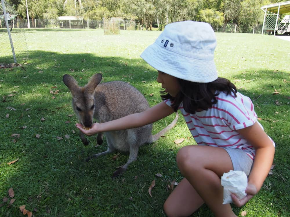 Billabong Zoo Port Macquarie