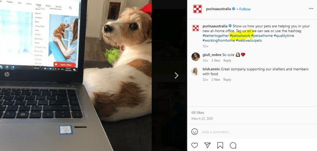 petsatwork instagram