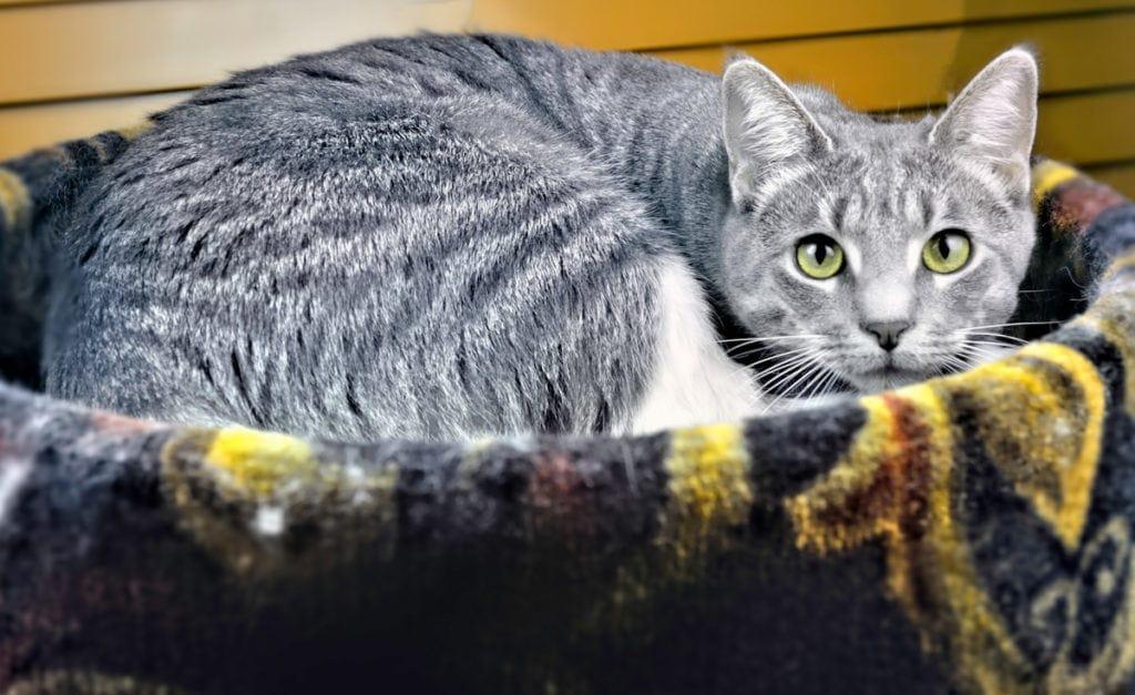 Cat in a heated cat bed