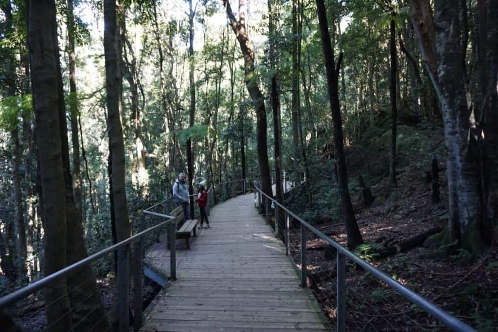 Scenic Walkway Blue Mountains