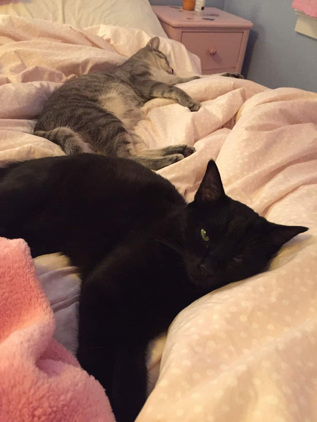 A black cat and a gray tabby sleeping on a bed.