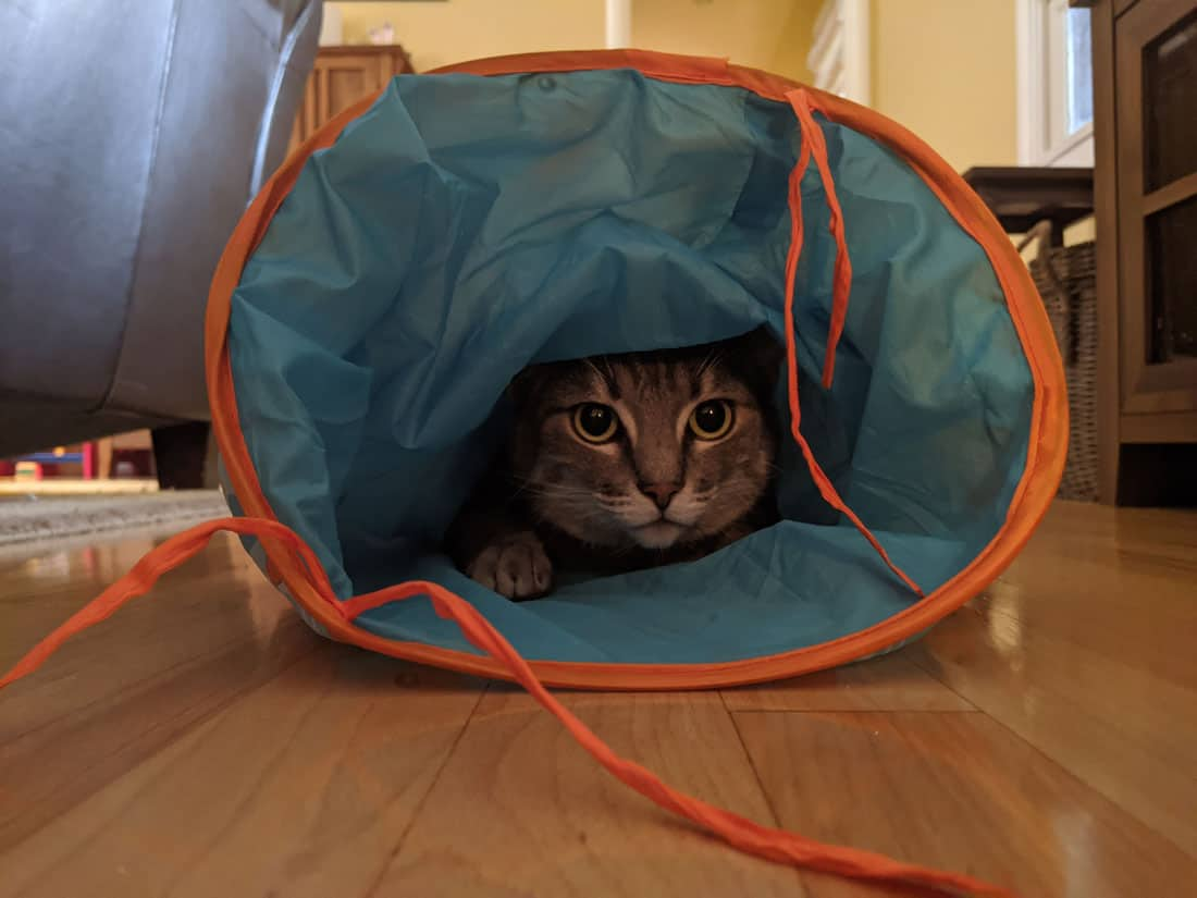 A gray tabby inside a cat tunnel toy.