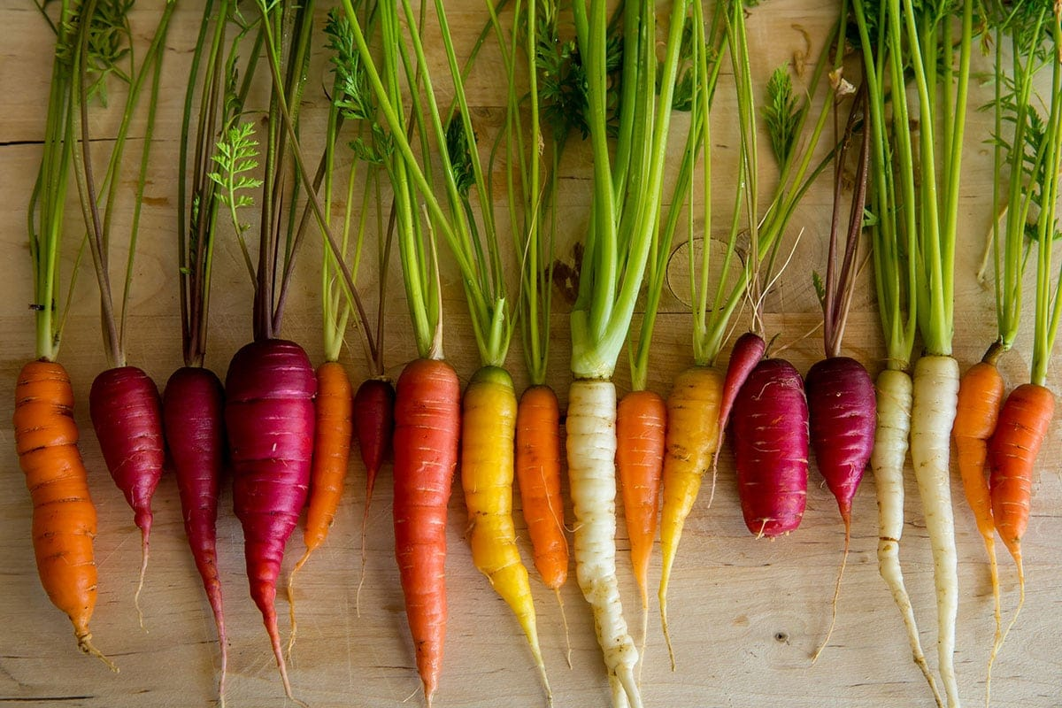 carrots varieties on a beige background