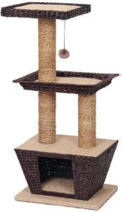 arbre chat osier betulla