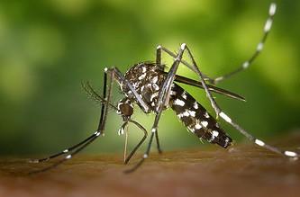Photo of Casanare se encuentra en zona de epidemia de dengue