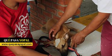 Photo of Yopal adelanta jornadas de vacunación antirrábica