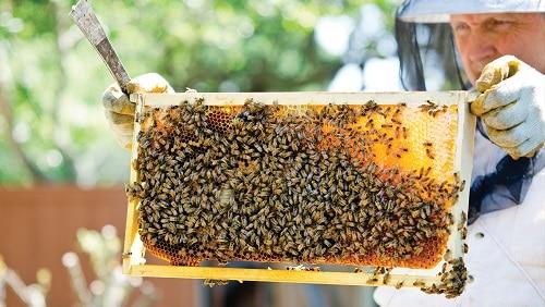 foundation vs foundationless beekeeping