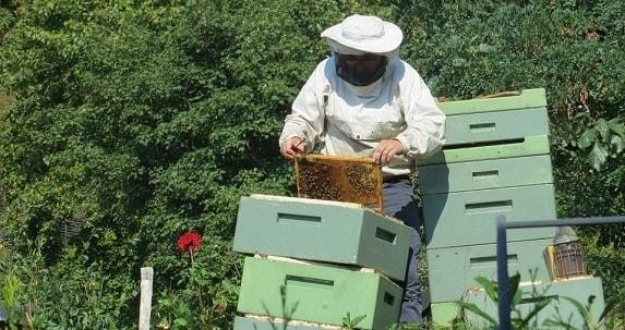 Beekeeper Splitting a Hive