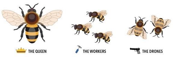 Bee Hierarchy