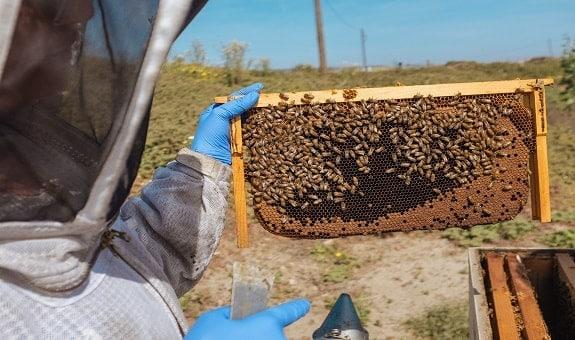 Characteristics of Good Beekeeping Gloves