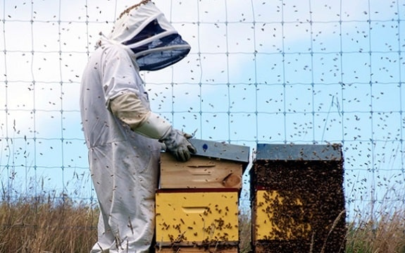 When to Add Honey Supers