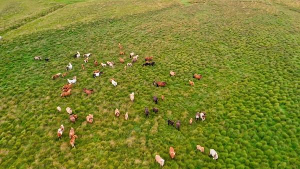 Drones & Animal Population