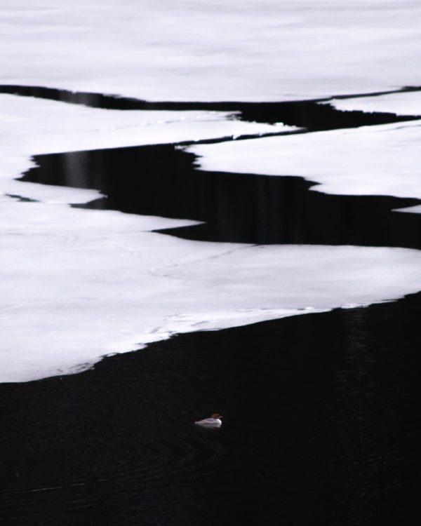 bianco e nero alto contrasto