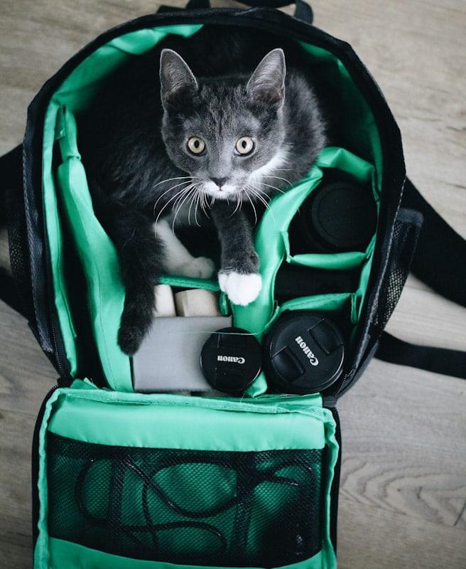 Cat Mesh Backpack