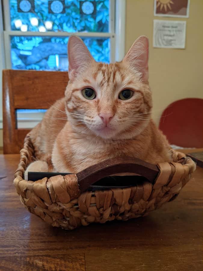 An orange tabby sitting in a basket.