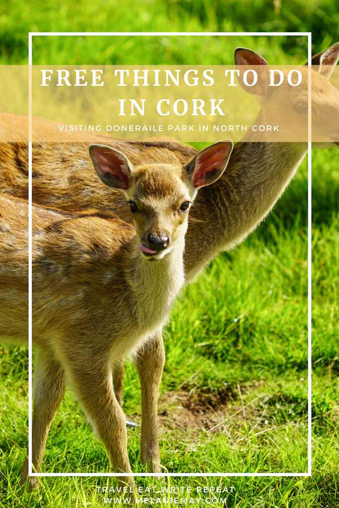 Picture of a baby deer and its mother. Visiting Doneraile Park - best free things to do in Cork, Ireland.