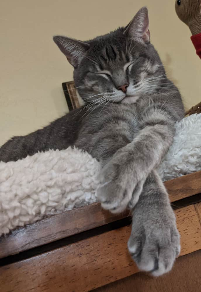 A sleeping gray tabby on top of a sherpa blanket.