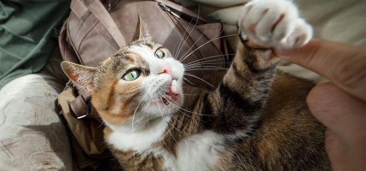 Cat Scratch Disease Presenting as Parinaud's Oculoglandular Syndrome