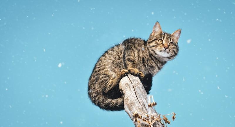 cat stuck on a tree