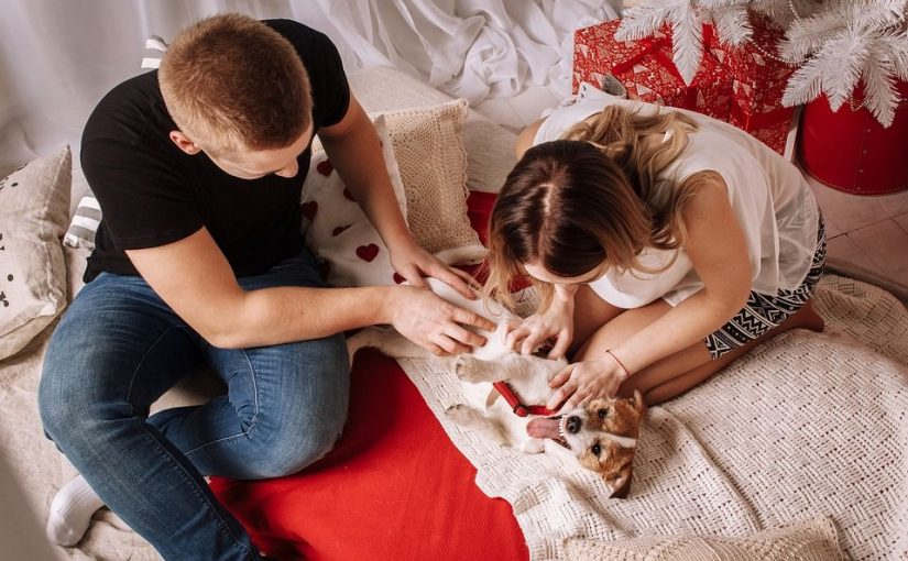 Tierisch verliebt - So finde ich einen Partner mit Haustier