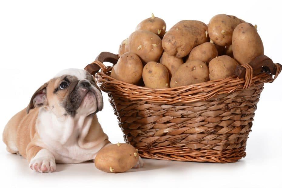 chien et patate douce