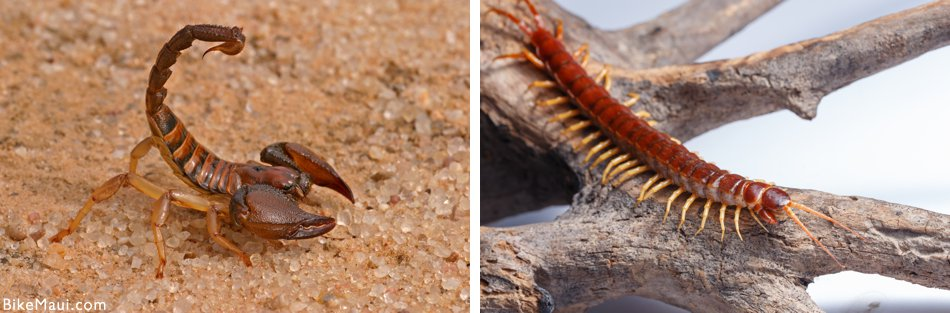 scorpions and centipedes