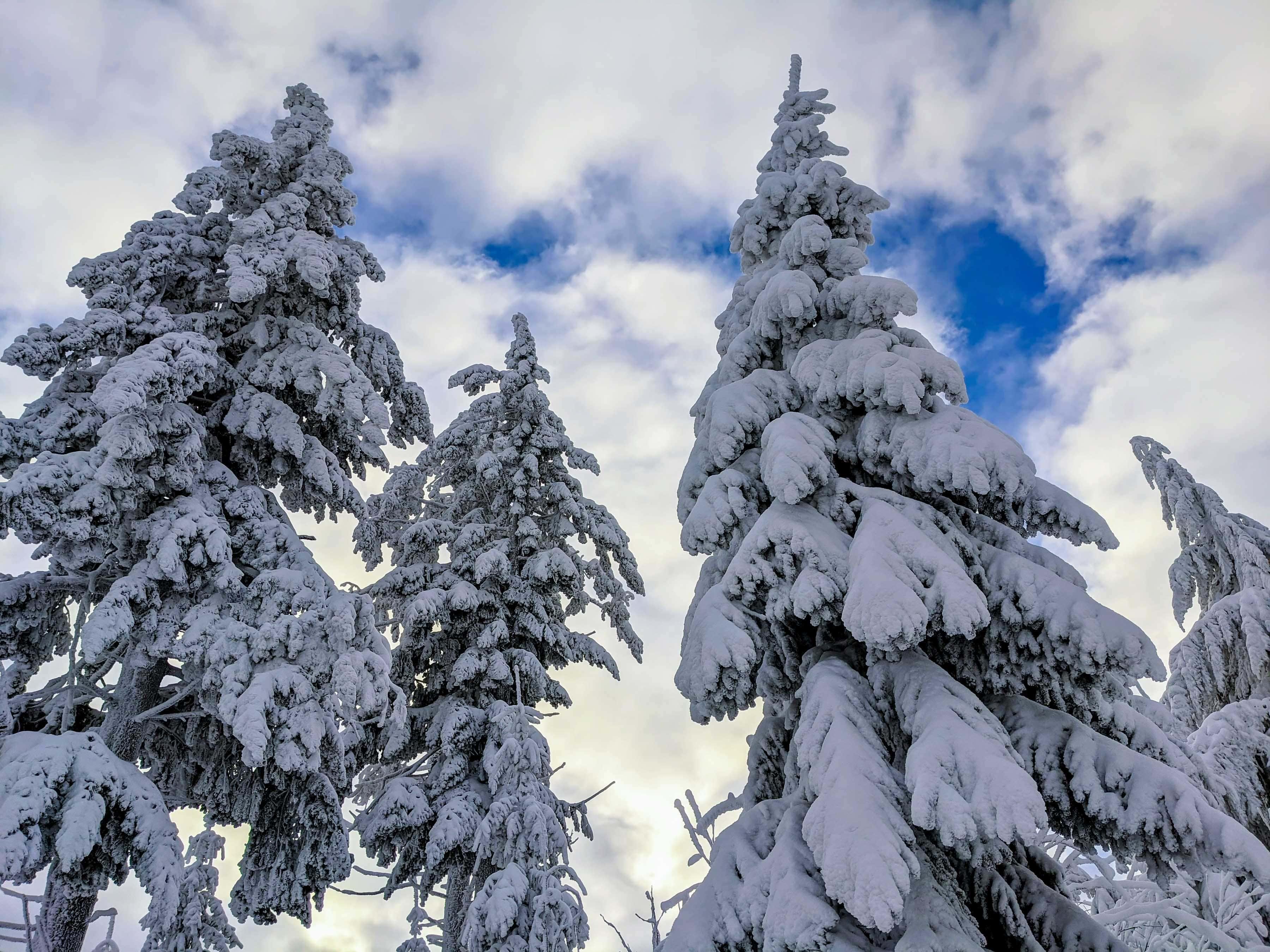 Winterzauber am Kickelhahn
