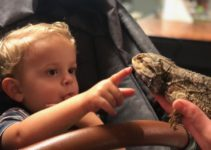 Slithering Fun: A Review of Australian Reptile Park