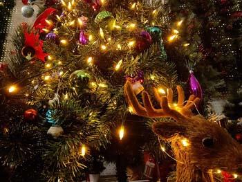 3: ASENEK Christmas Light