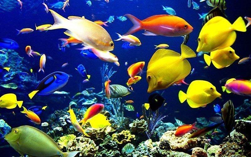 Akvaryum ve Akvarist Nedir?