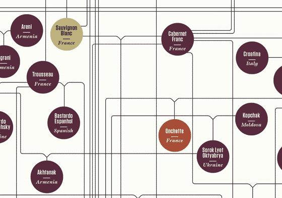 Genealogia do vinho