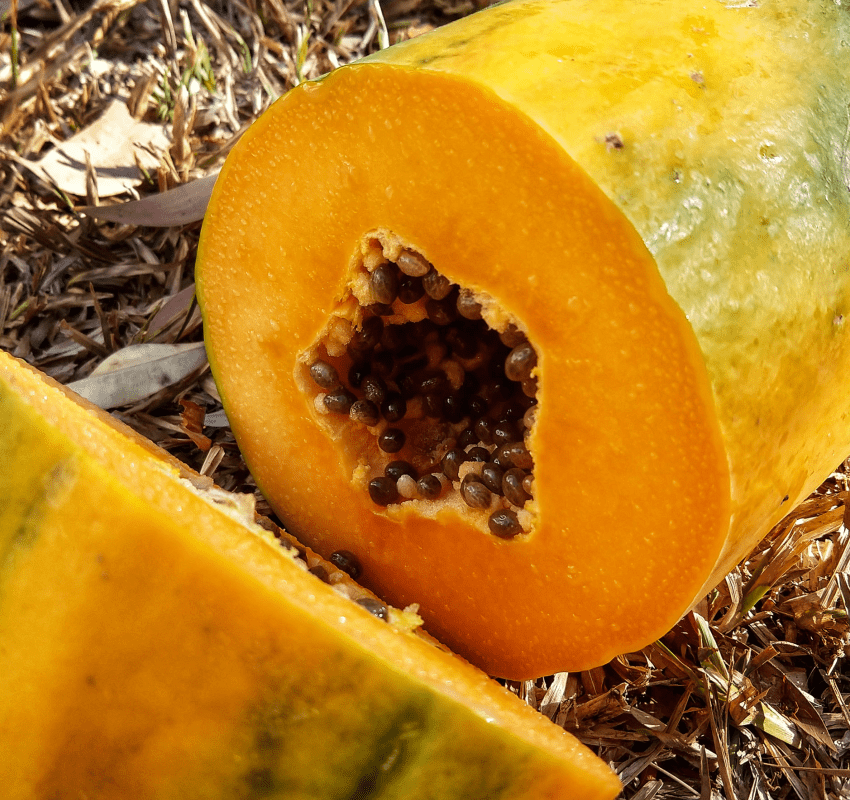 Fruit you can grow in the tropics