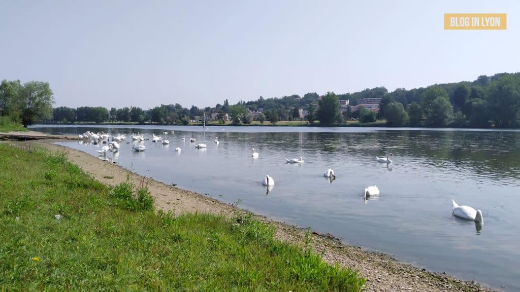 Où se baigner près de Lyon - Plan d eau de Bordelan | Blog In Lyon
