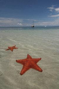 starfish in bocas