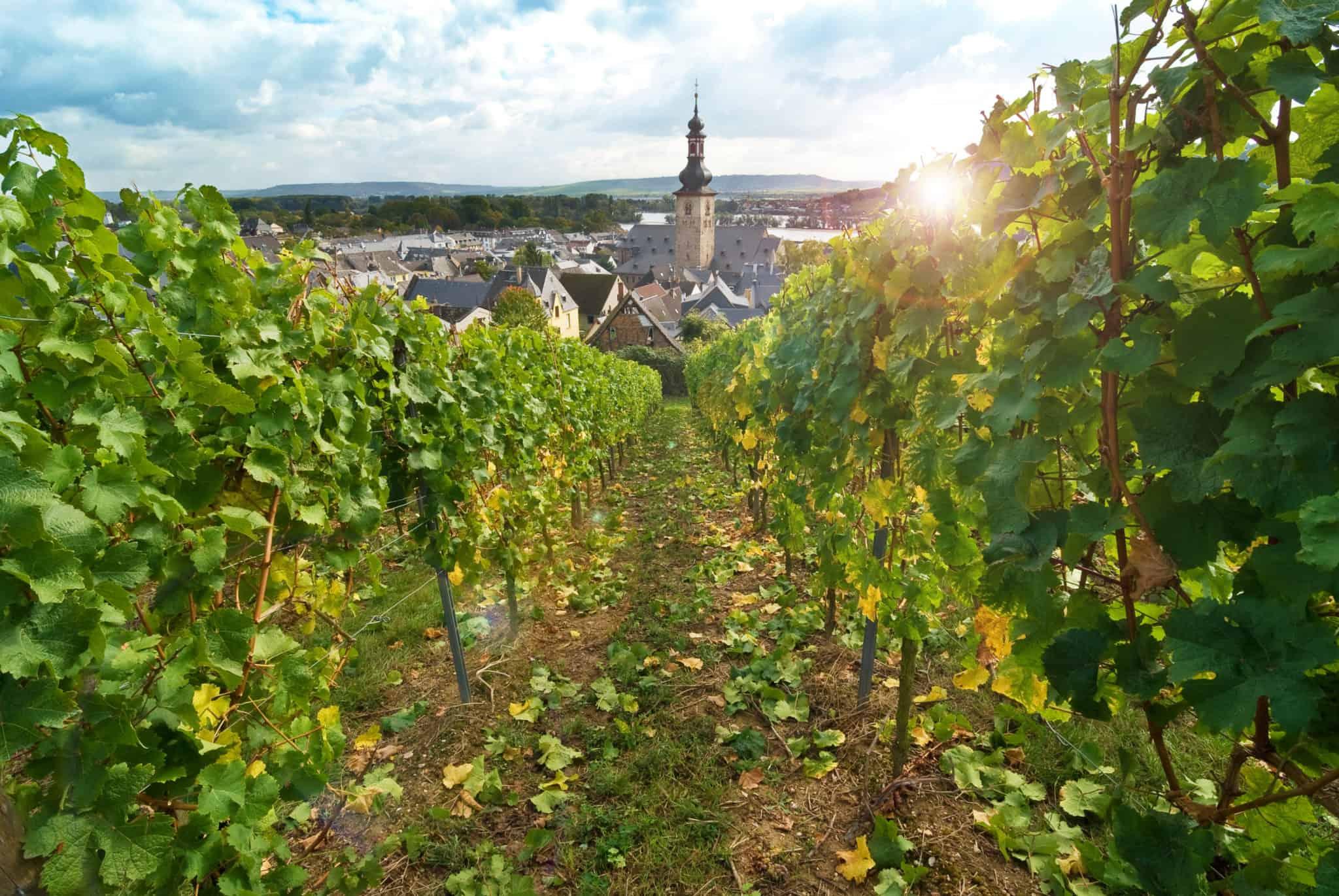 Auf Weinreise im Rheingau